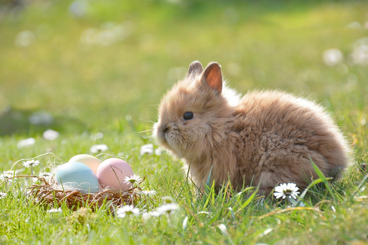 A Psicologia Econômica e os Ovos de Páscoa